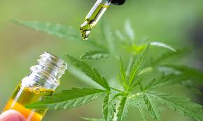 Right Consumption of CBD – Gain an Insight About Cannabis